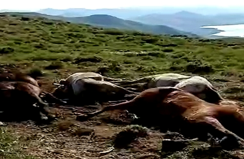 Piranshahr Environmentalists Association: Killing  the horse of tradesmen is a clear offensive to the creatures and took their life